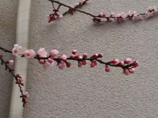 Photo 3月 22, 17 07 00.jpg