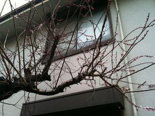 Photo 3月 22, 17 07 47.jpg